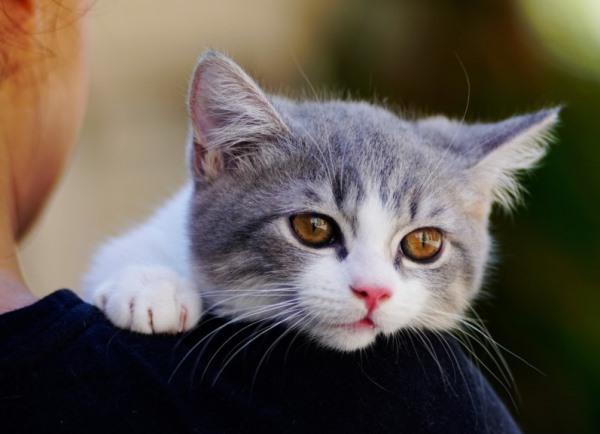 5 красивых котиков