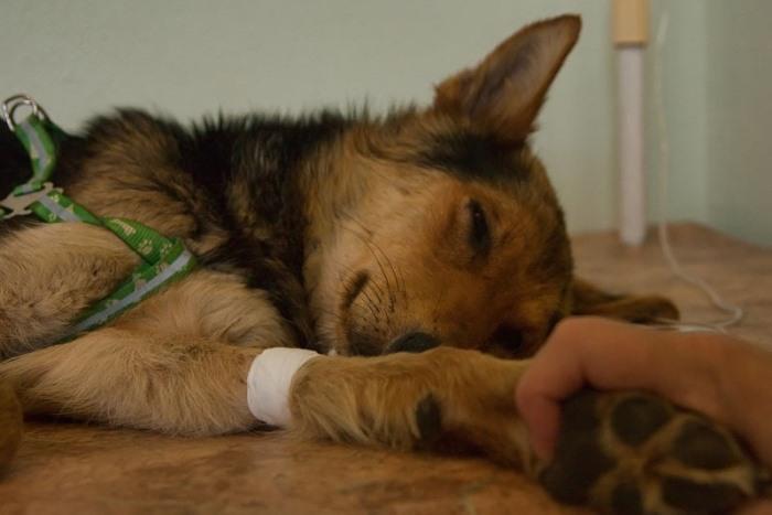 Диагностика вирусных заболеваний в ветеринарии